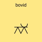 bovid