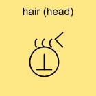 hair (head)
